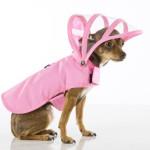 Kutyavilág- a legötletesebb kiegészítők négylábú barátaink számára!