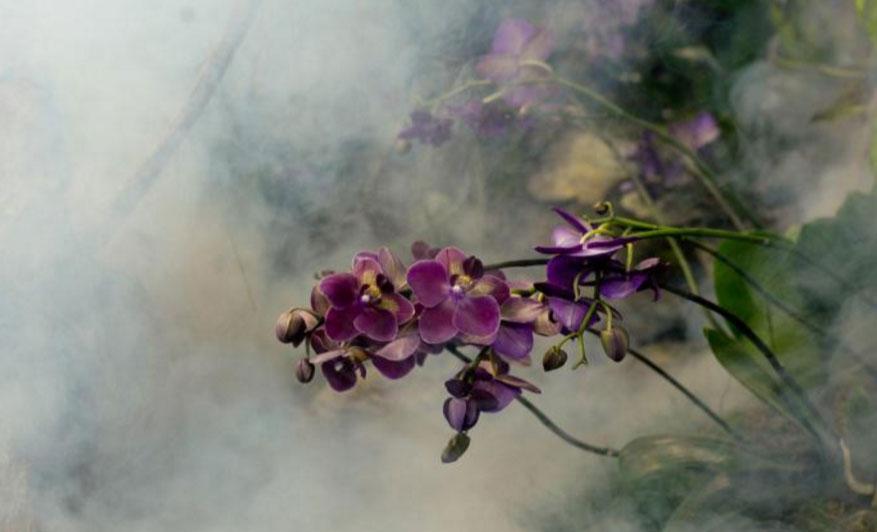 Orchidea ünnep