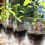pet palack és pet kupak újrahasznosítás - cserép és virágtartó