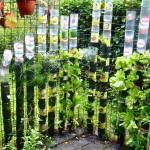 pet palack és pet kupak újrahasznosítás - fűszernövénykert