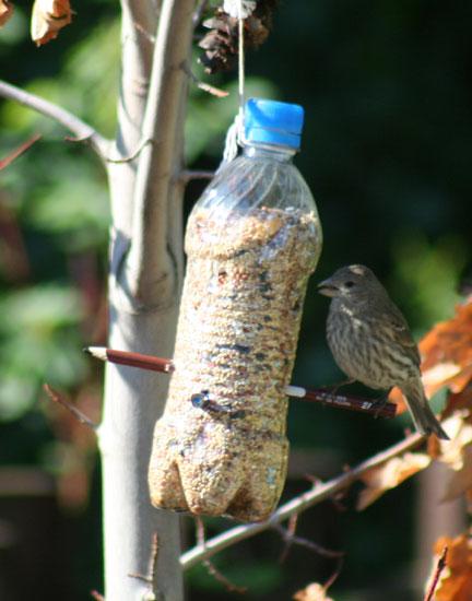 pet palack és pet kupak újrahasznosítás - madáretető műanyag palack