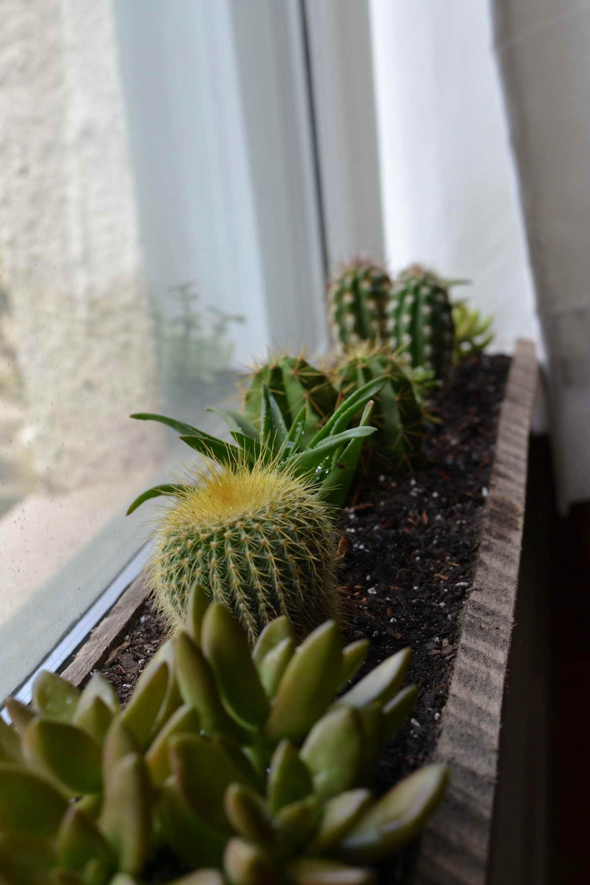 ablakpárkány virág ágyás
