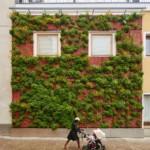 függőleges kert a városban