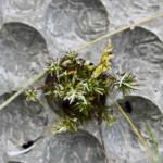függőleges kert beton panel