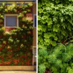 függőleges kert