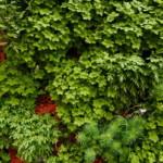 Függőleges kert - Zöld fal egy beton falon egész évben