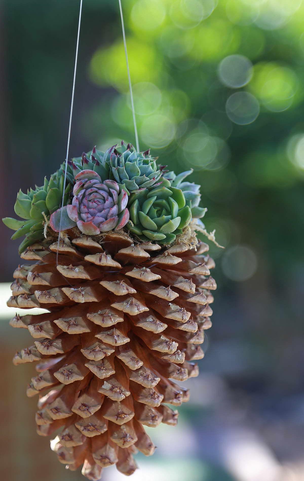 fenyő toboz virág tartó