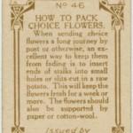házi praktika- hogy csomagolj virágot