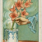 házi praktika - hogy frissítsd fel a virágot