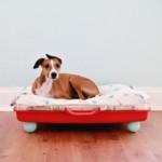különleges kutya fekhely - ágy