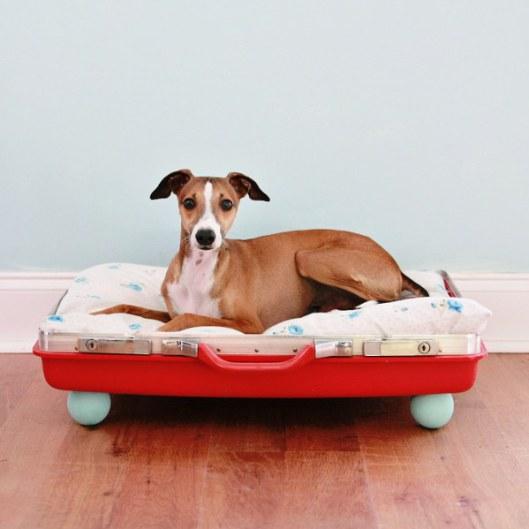 különleges kutya fekhely - ágy bőrőnd