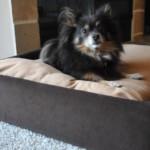luxus kutya fekhely - ágy - kanapé