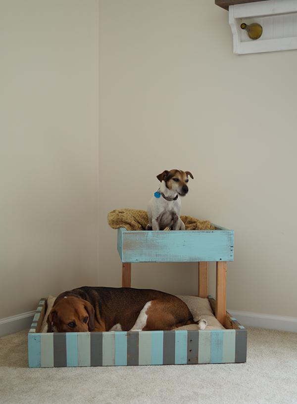dupla kutya fekhely - raklap