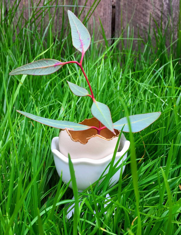 függő virágcserép tojásból