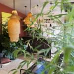 kis nyaraló - növények