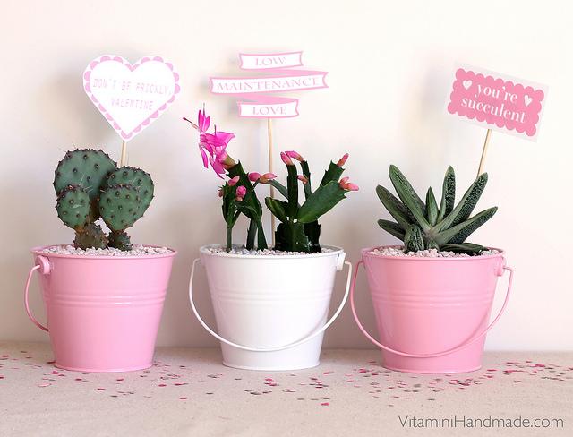 Valentin napi ötlet - kaktusz szerelem cserép