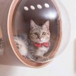 design macska ház - cica ház a falra